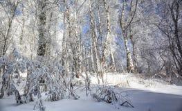 Bosque en las montañas Fotos de archivo libres de regalías