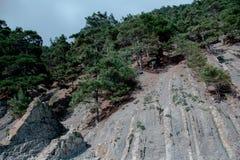 Bosque en las montañas Foto de archivo