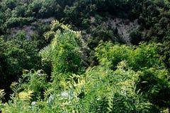 Bosque en las montañas Foto de archivo libre de regalías