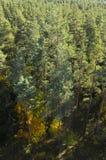 Bosque en las montañas de Anchupani Imágenes de archivo libres de regalías