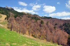 Bosque en las montañas de Ciucas Foto de archivo libre de regalías