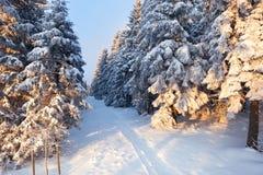 Bosque en las montañas de Harz, Alemania del invierno Imágenes de archivo libres de regalías