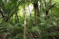 Bosque en las zonas tropicales Fotografía de archivo