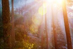 Bosque en luz de la puesta del sol Fotos de archivo