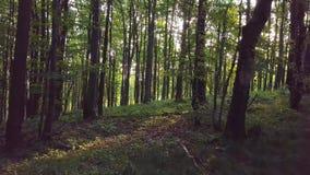 Bosque en luz del sol de la mañana metrajes