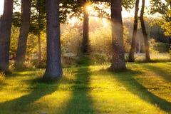 Bosque en luz posterior Fotografía de archivo