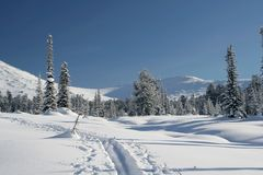 Bosque en montañas, esquí-pista del invierno Fotografía de archivo libre de regalías