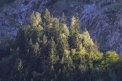 Bosque en montañas francesas en el tiempo de verano foto de archivo