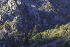 Bosque en montañas francesas en el tiempo de verano imagenes de archivo