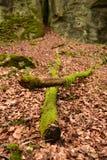 Bosque en Mullerthal, Luxemburgo Imagenes de archivo