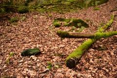 Bosque en Mullerthal, Luxemburgo Imagen de archivo