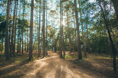 Bosque en Nam Nao National Park foto de archivo