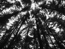 Bosque en negro Foto de archivo libre de regalías