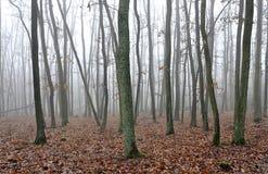 Bosque en niebla imágenes de archivo libres de regalías