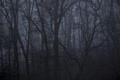 Bosque en niebla Imagen de archivo
