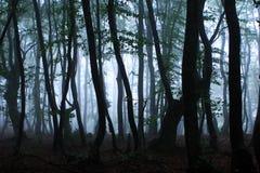 Bosque en niebla Foto de archivo libre de regalías