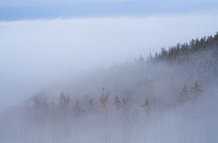 Bosque en niebla densa Imagen de archivo