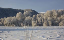 Bosque en nieve Fotografía de archivo