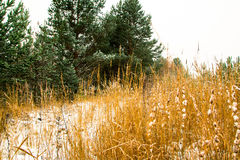 Bosque en nieve en un invierno Imagenes de archivo
