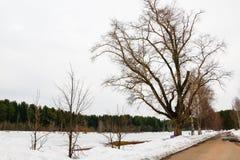 Bosque en nieve en un invierno Fotografía de archivo