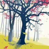 Bosque en otoño Imagen de archivo libre de regalías