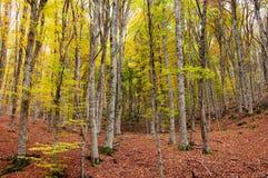 Bosque en otoño Imágenes de archivo libres de regalías