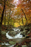 Bosque en otoño Imagen de archivo
