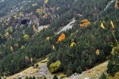 Bosque en otoño Fotografía de archivo