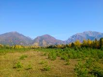 Bosque en otoño temprano Fotos de archivo libres de regalías