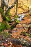 Bosque en otoño Tiempo soleado hermoso imagen de archivo libre de regalías
