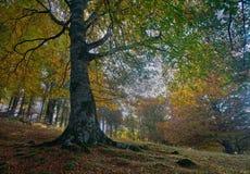 bosque EN ο oto Στοκ Εικόνες