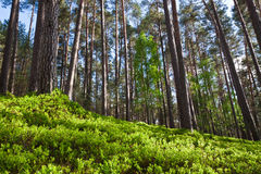 Bosque en parque nacional Imagen de archivo