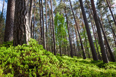 Bosque en parque nacional Foto de archivo