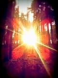 Bosque en Polonia Imagen de archivo libre de regalías