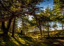 Bosque en Polonia septentrional Imágenes de archivo libres de regalías