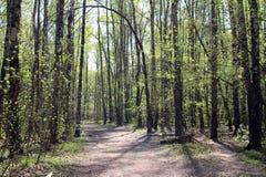 Bosque en primavera Foto de archivo