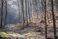 Bosque en primavera temprana Foto de archivo