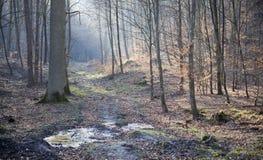 Bosque en primavera temprana Fotografía de archivo libre de regalías