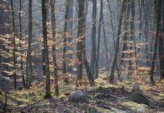 Bosque en primavera temprana Imágenes de archivo libres de regalías
