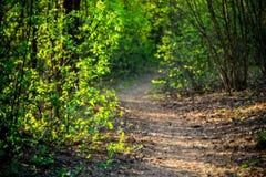 bosque en primavera, trayectoria todo verde y brillante, que camina Imagen de archivo