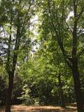 Bosque en Reinickendorf en Berlín, Alemania Fotografía de archivo