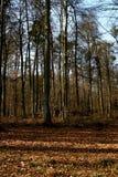 Bosque en resorte Foto de archivo