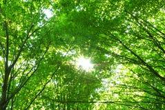bosque en resorte Fotografía de archivo libre de regalías