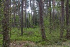 Bosque en resorte Fotografía de archivo