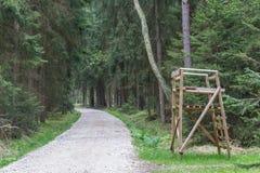 Bosque en resorte Fotos de archivo