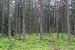 Bosque en resorte Imágenes de archivo libres de regalías