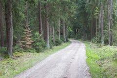 Bosque en resorte Imagen de archivo libre de regalías