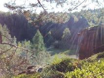 Bosque en sol del mediodía Fotografía de archivo libre de regalías