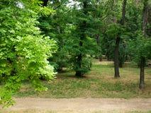 Bosque en Southern Europe Imagen de archivo