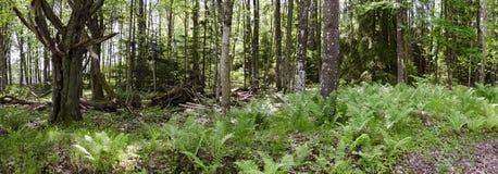 Bosque en Suecia Imagen de archivo libre de regalías